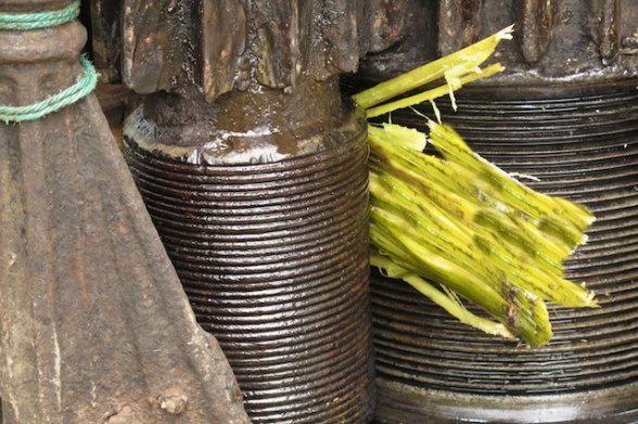 The sugar cane as it come out from the grinder