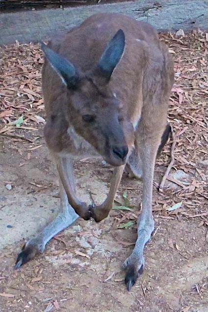 Adelaide Blog 11
