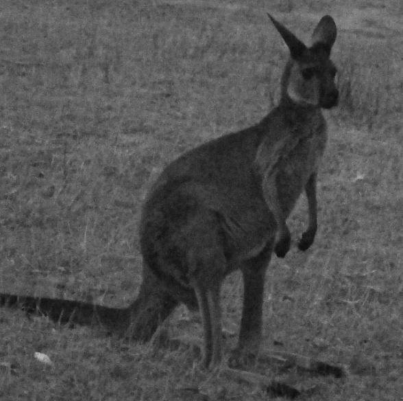 Adelaide Blog 15