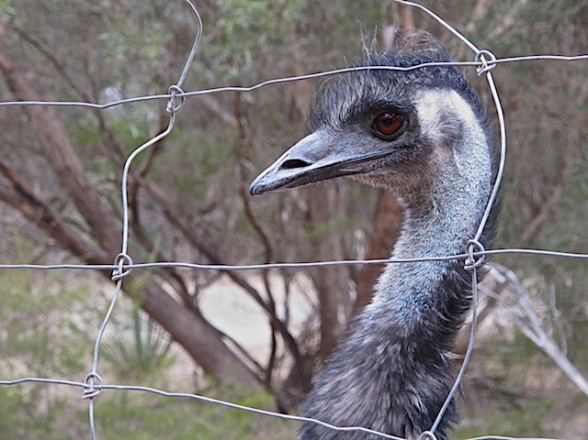Kangaroo Island Blog 9