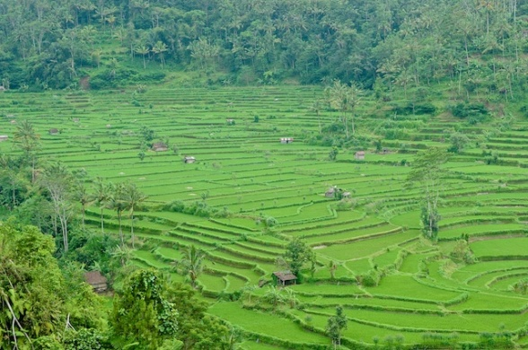 Bali Blog 6