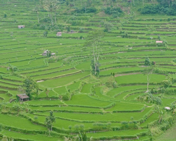 Bali Blog 7