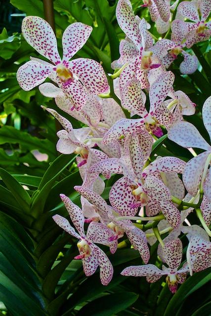 Singapore blog 13