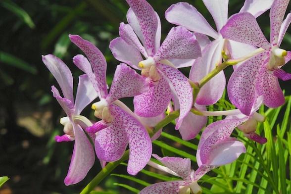 Singapore blog 14