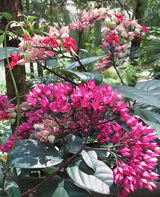 Singapore blog 21