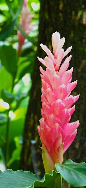 Singapore blog 25