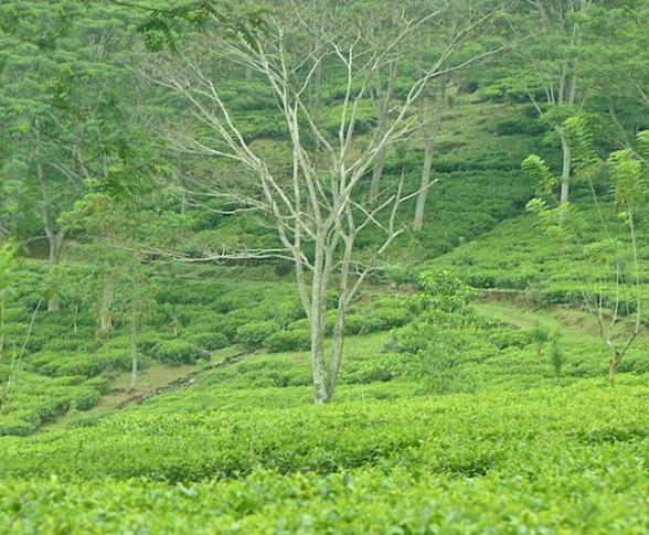 Sri Lanka Blog PIX 11