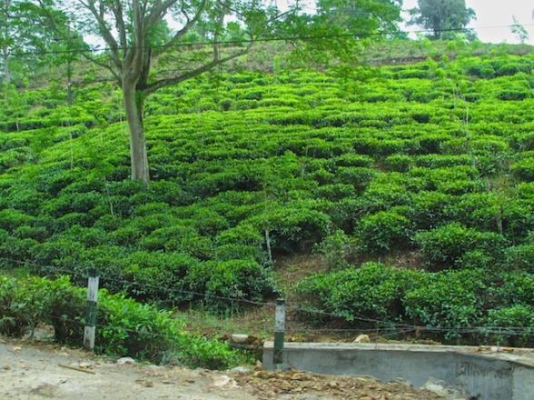 Sri Lanka Blog PIX 12