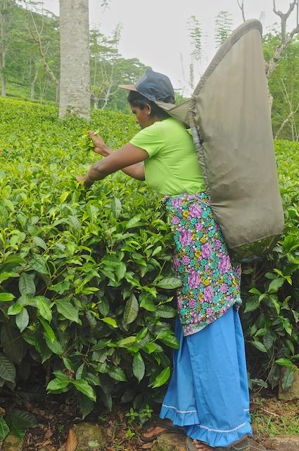 Sri Lanka Blog PIX 14