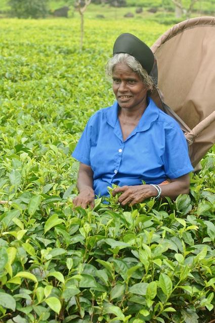 Sri Lanka Blog PIX 15