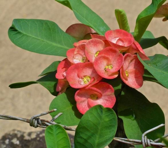 Sri Lanka Blog PIX 35