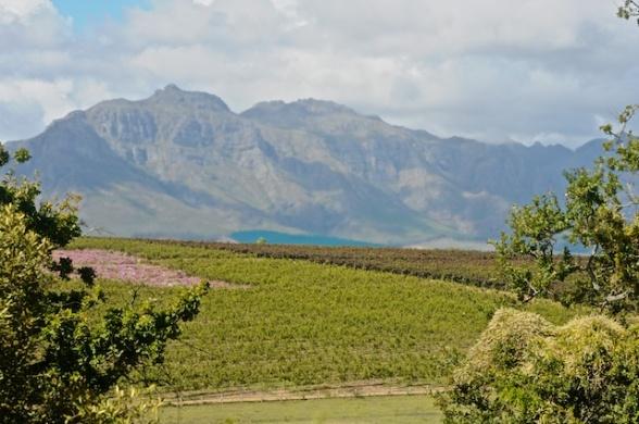 Stellenbosch 052