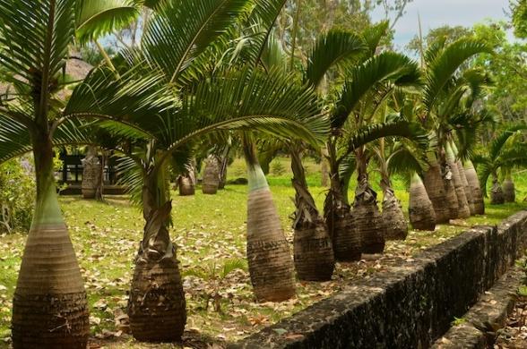 Mauritius12