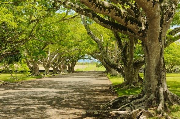 Mauritius26