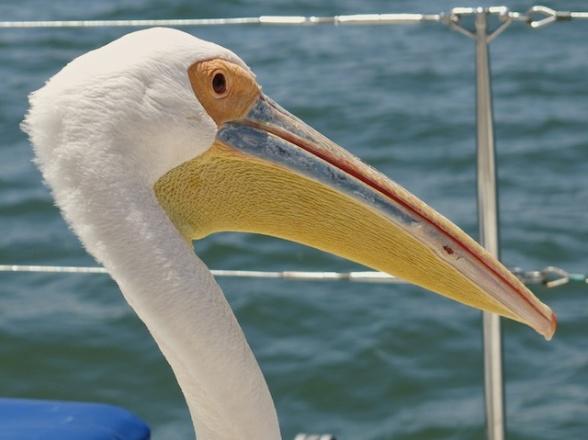 Walvis Bay7