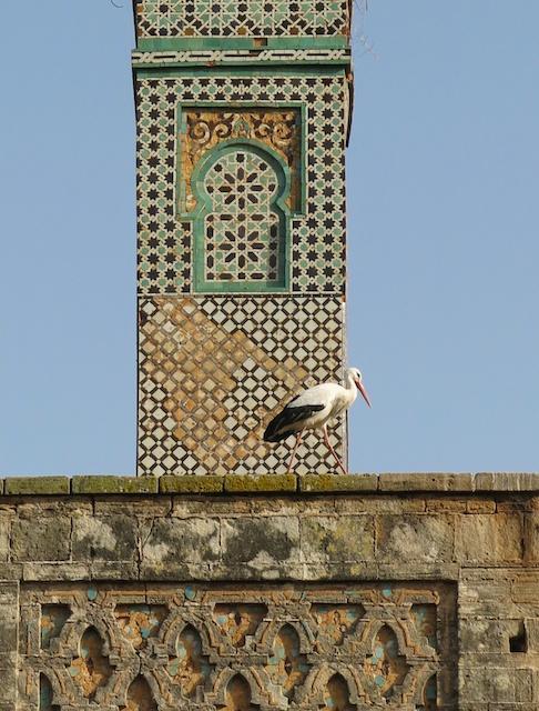 Rabat16
