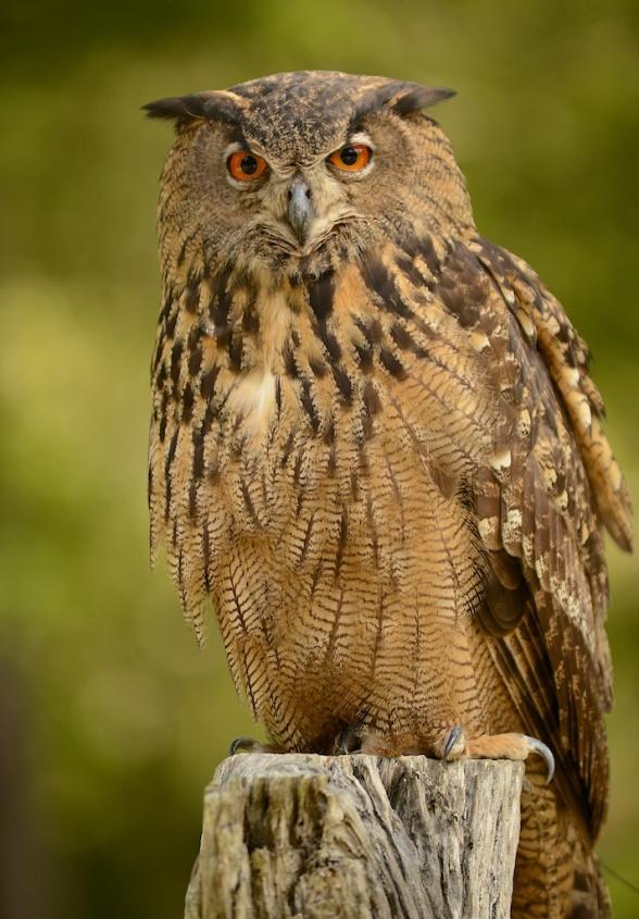 Birds of Prey copyright Carolyn J. Wood